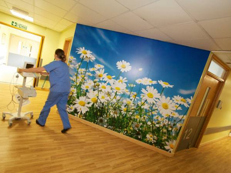 Wall Murals Image